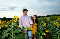 Southern & Rhett - Sunflower Field at the Iron Horse