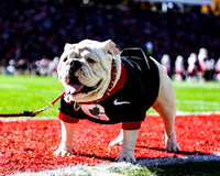 UGA X (Que) in his first black out game.
